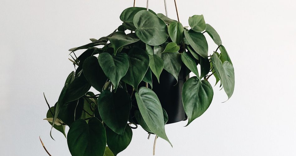 hangende plantenbak